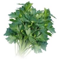 Петрушка листовая Гигантелла весовая