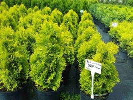 Продам различные садовые растения