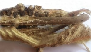Астрагал шерстистоцветковый (корень) 1кг