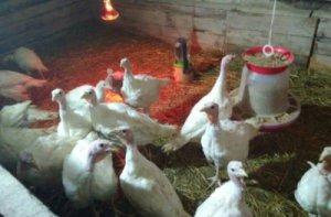 Инкубационные яйца разных видов птицы