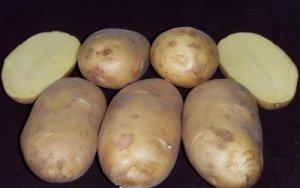 Картофель ранний, средеранний посадочный: Киранда, Киви, Щедрик и др.